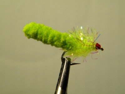 Mop Fly  -  Green inch worm