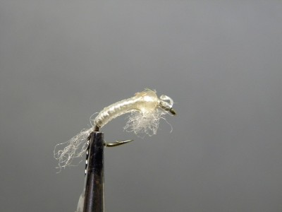 Caddis Nymph - clear